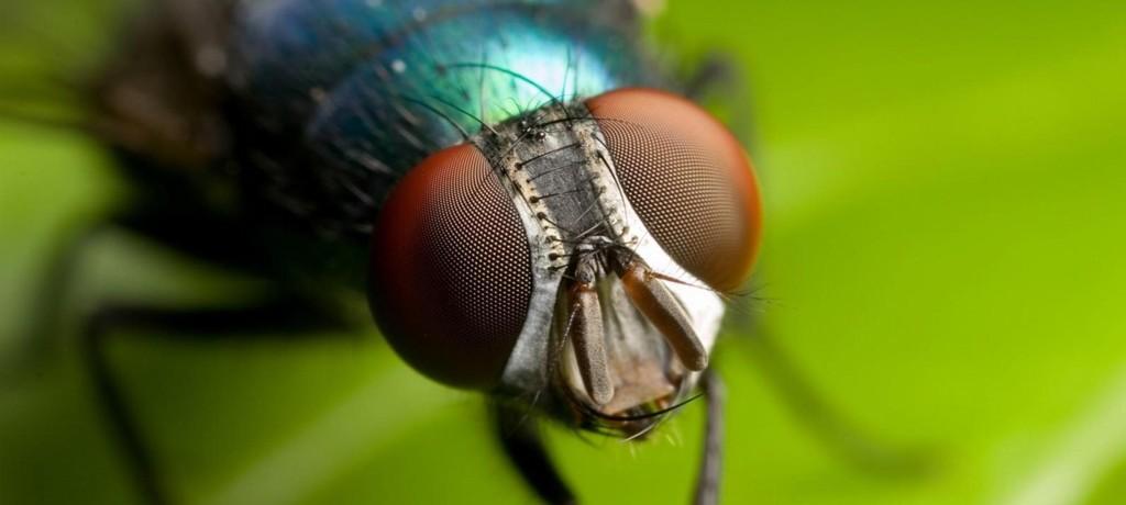 La teoria della carta moschicida: seconda parte