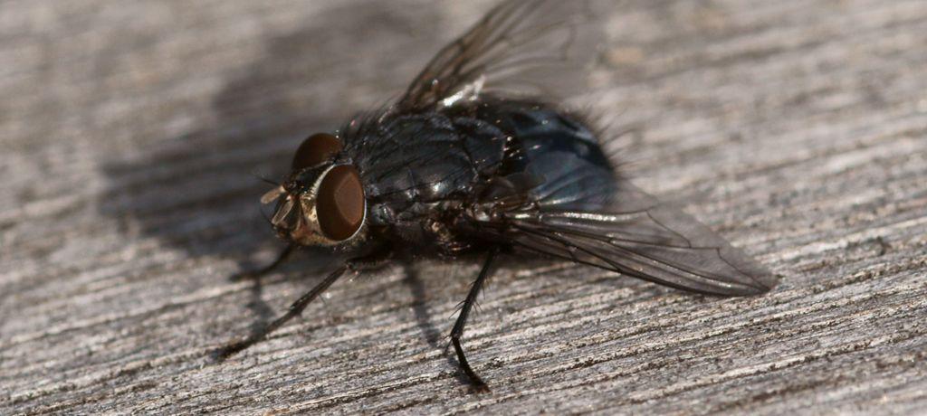 La teoria della carta moschicida: terza parte
