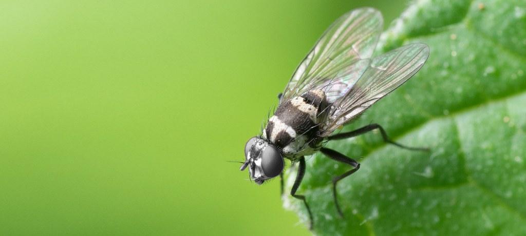 La teoria della carta moschicida: prima parte
